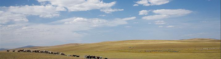 푸른 하늘, 쏟아지는 별. 몽골 초원에 서다.